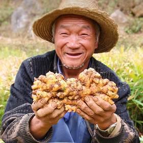 低至19.9元!云南蒙自新鲜现挖小黄姜 5斤 两份减4.9元