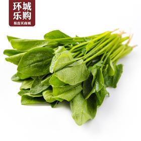 菠菜一份1kg左右-517988 | 基础商品