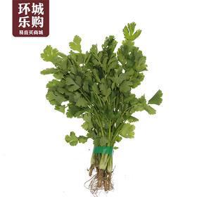 香菜一份500g-517995 | 基础商品