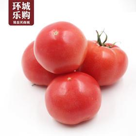 西红柿一份500g左右-518060 | 基础商品