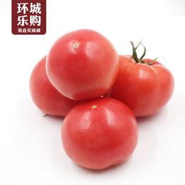 西红柿一份500g左右-518060