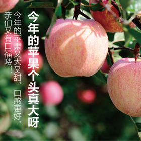 红富士苹果一箱10斤
