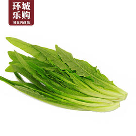 油麦菜一份1kg左右-517889 | 基础商品