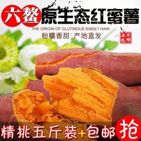 【超甜】正宗福建六鳌沙地红蜜番薯  富硒地瓜  现挖现发 绿色无公害