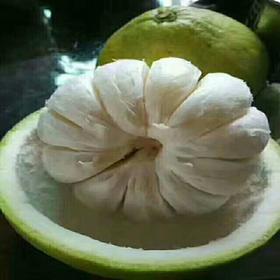 【一颗认真成长的柚子10-12号供止发货,下单的春节后发】广东梅县兴缘冰糖柚4个60元起,多省包邮