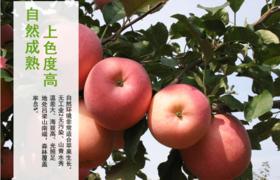 壶口苹果1个