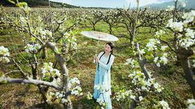四姑娘山丹巴藏寨金川小环线花季5日休闲摄影