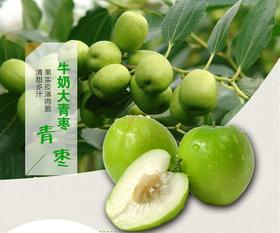 新鲜水果大青枣 牛奶蜜枣 中大果贵妃枣 5斤 脆甜多汁