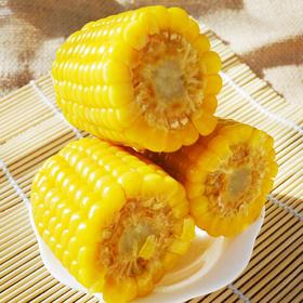 农家非转基因新鲜黄糯玉米甜玉米棒熟黏粘真空装