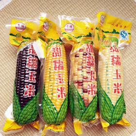 山西青穗忻州特产4色黑黄白黄糯玉米穗玉米棒220克*12根真空装