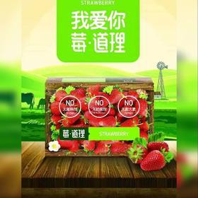 【辽宁省包邮】莓·道理丹东新鲜99红颜草莓3斤装