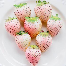2月27号发货【甜果屋】菠萝莓 白草莓(日本品种初恋の香り)  甜度高 防癌症 菠萝加草莓味