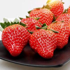 【红颜草莓】丹东久久红颜草莓 3斤装