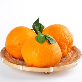四川蒲江耙耙柑 纯甜无酸 鲜果现采现发 5斤装