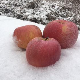 【大雪封路,10天内发货】特级品质,童年的味道,越丑越好吃的临猗脆甜丑苹果,鲜嫩多汁,健康无害