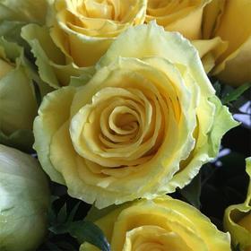 【菲集】肯尼亚农场直供优质玫瑰 Good Time 美好时光 鲜切花玫瑰花黄玫瑰
