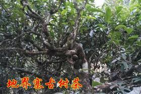 2019年地界纯料古树茶纯料私人高端定制1700元/公斤
