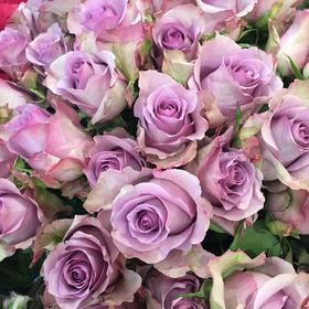 【菲集】肯尼亚农场直供优质玫瑰 Nightingale 夜莺 鲜切花玫瑰花