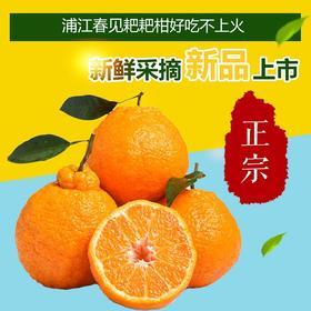 四川蒲江春见粑粑柑 当季新鲜水果现摘现发5斤包邮
