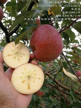四川大凉山丑苹果-10斤/箱