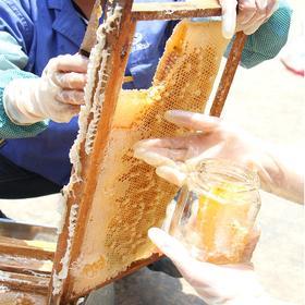 云南宜良宝洪深山蜜源地 口口爆浆的巢蜜 农家土蜂蜜