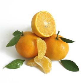 一果三味橙桔柚,德庆老树皇帝柑【德庆皇帝柑】