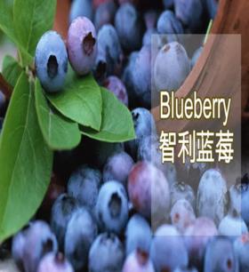 智利蓝莓—125g/12盒、(郑州UU跑腿送货)全国包邮、偏远地区除外