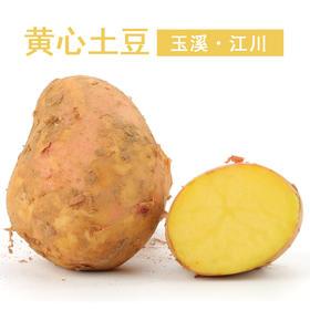 云南农家 新鲜黄心土豆 马玲署 洋芋2.5kg