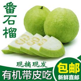 台湾白心芭乐  番石榴 美颜瘦身治便秘  新鲜水果 现摘现发包邮