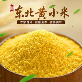 东北农家小米 杂粮小黄米 孕妇宝宝月子米 五谷杂粮5斤装包邮