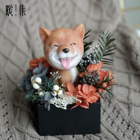 【天然呆】永生花柴犬家居摆件狗年生肖礼物新年礼物车载摆件