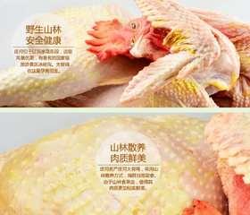 【12号截单!新春特价 赠粉条】凤百年大骨鸡  优质散养大骨鸡白条鸡 肉质鲜美