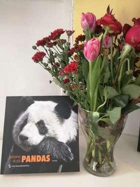Historias de los pandas