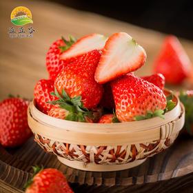 建德草莓红颜牛奶草莓新鲜水果孕妇水果 3斤装 顺丰包邮