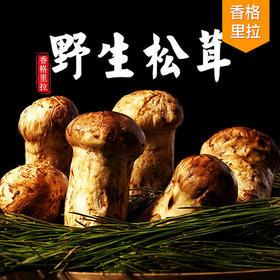 舌尖美食 香格里拉速冻松茸500g(5-7cm)
