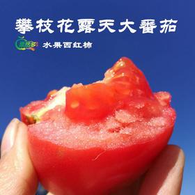【优选】四川攀枝花沙瓢露天水果番茄  新鲜露天西红柿   自然熟  产地直发