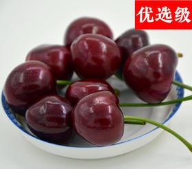 【大樱桃】优选级/2斤装/单果10-12g/大连基地/当季鲜果/甜脆鲜润