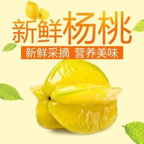 农家现摘杨桃新鲜 福建漳州特产树上熟 水果新鲜杨桃5斤包邮