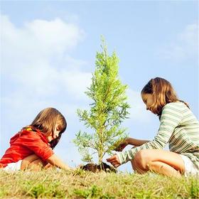 种树、挖野菜、磨豆浆、摘采莓……一日长丰马郢亲子营带你感受春天的气息!