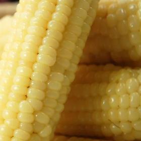 海南东方市甜玉米,8元10根,助力滞销农户。由于价格上涨等原因,现将以下单客户的款项全部退回,由此给您带来的不便敬请谅解。