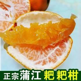 【甜果屋】四川蒲江春见粑粑柑 当季新鲜水果现摘现发5斤包邮