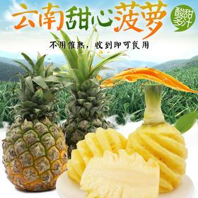 云南蒙自现摘甜心菠萝8斤装,5-8个新鲜香水小菠萝包邮!