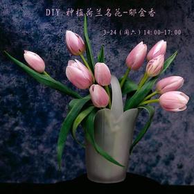"""【妈网互动】 03/24(周六 ) DIY 种植""""荷兰""""名花-郁金香~"""