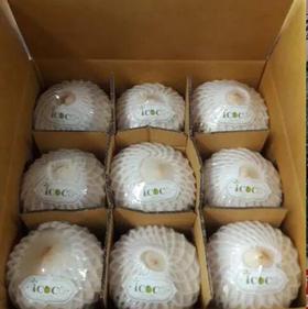 【进口水果】泰国椰青 椰子 精品热带水果 大泉州包邮