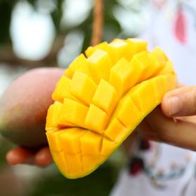 海南贵妃芒果 香甜多汁 皮薄核小 原产地芒果 新鲜采摘 净重5斤