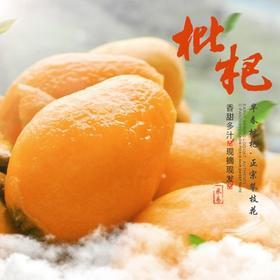 5斤超大果 四川攀枝花米易枇杷新鲜水果早钟大五星琵琶果顺丰包邮