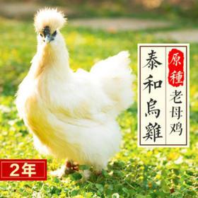 泰和乌鸡2年农家散养现杀乌骨鸡土鸡