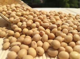 农家自种特产散装黄豆 打豆浆发豆芽土黄豆 天然放心食用1000g