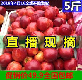 现摘农家油桃桃子水果新鲜包邮5斤山东当季现货孕妇甜蜜黄心蜜桃