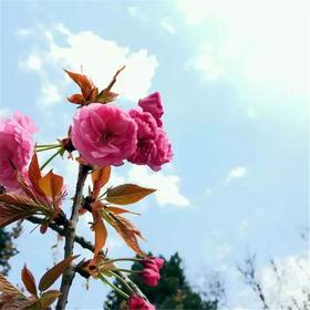赏花、寻花、诵古诗、学科学……周末玩妈带你走进不一样的科大校园!【3.31】